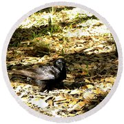 Round Beach Towel featuring the photograph Crow 000 by Chris Mercer