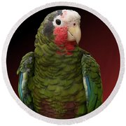 Cuban Amazon Parrot Round Beach Towel