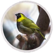 Cuban Grassquit Round Beach Towel