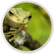 Round Beach Towel featuring the photograph Cuban Tree Frog 000 by Chris Mercer