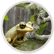 Round Beach Towel featuring the photograph Cuban Tree Frog 001 by Chris Mercer