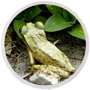 Round Beach Towel featuring the photograph Cuban Tree Frog 002  by Chris Mercer