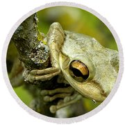 Round Beach Towel featuring the photograph Cuban Tree Frog  by Chris Mercer