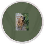Cujo Looking At A Butterfly Round Beach Towel by Val Oconnor