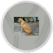 Cujo Sitting Around Round Beach Towel
