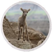 Curiosity In The Badlands Round Beach Towel
