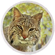 Curiosity The Bobcat Round Beach Towel