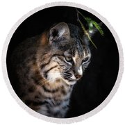 Curious Bobcat Round Beach Towel by Elaine Malott
