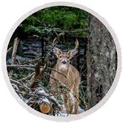 Curious Buck Round Beach Towel