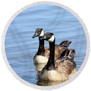 Curious Canda Geese Round Beach Towel by Sheila Brown