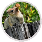 Curious Chipmunk Round Beach Towel