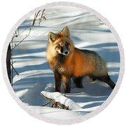 Curious Fox Round Beach Towel