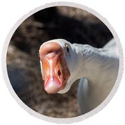 Curious Goose Round Beach Towel by Kenneth Albin