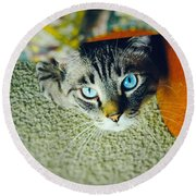 Round Beach Towel featuring the photograph Curious Kitty by Silvia Ganora