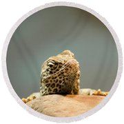 Curious Lizard Round Beach Towel by David Stasiak