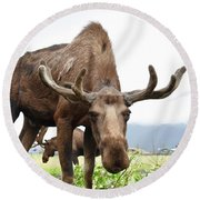 Curious Moose Round Beach Towel