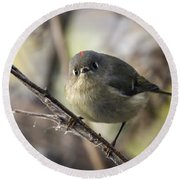 Curious Ruby-crowned Kinglet Round Beach Towel