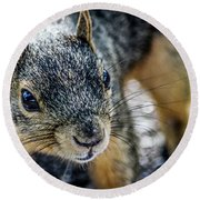Round Beach Towel featuring the photograph Curious Squirrel by Joann Copeland-Paul