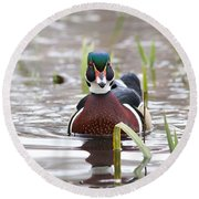 Round Beach Towel featuring the photograph Curious Wood Duck by Lynn Hopwood