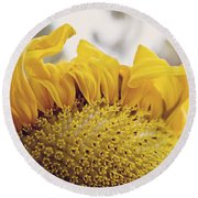 Curling Petals On Sunflower Round Beach Towel