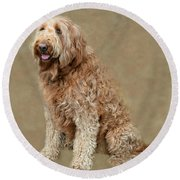 Curly Labradoodle Round Beach Towel