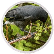 Currawong On A Vine Round Beach Towel