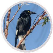 Currawong Round Beach Towel by Werner Padarin