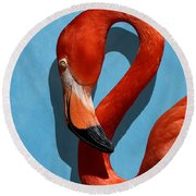 Curves, A Head - A Flamingo Portrait Round Beach Towel
