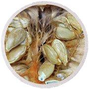Cut Pumpkin - Pumpkin Seeds Round Beach Towel