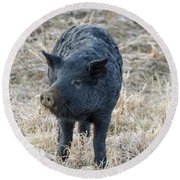 Round Beach Towel featuring the photograph Cute Black Pig by James BO Insogna