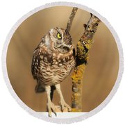 Cute Burrowing Owl Round Beach Towel