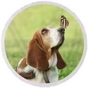 Cute Dog With Butterfly On His Nose Round Beach Towel