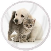 Cute Kitten And Perfect Puppy Round Beach Towel