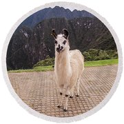 Cute Llama Posing For Picture Round Beach Towel
