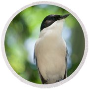 Round Beach Towel featuring the photograph Cyanopica by Judy Kay