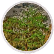 Cypress Tree Round Beach Towel