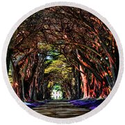 Cypress Tree Tunnel Round Beach Towel
