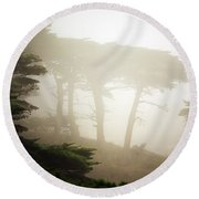 Cyprus Tree Grove In Fog Round Beach Towel