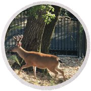 Round Beach Towel featuring the photograph D8b6336 8 Point Buck At Our Home Ca by Ed Cooper Photography