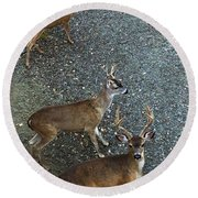 Round Beach Towel featuring the photograph D8b6353 3 Mule Deer Bucks Ca by Ed Cooper Photography