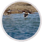 Gadwall Ducks - In Flight Side By Side Round Beach Towel