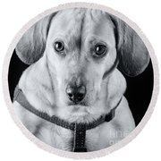 Dachshund Lab Mix Round Beach Towel