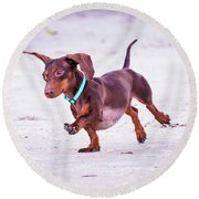 Dachshund On Beach Round Beach Towel