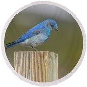 Daddy Bluebird Guarding Nest Round Beach Towel