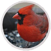 Daddy Cardinal  Round Beach Towel by Skip Willits