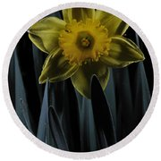 Daffodil By Moonlight Round Beach Towel