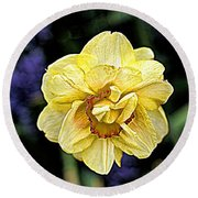 Round Beach Towel featuring the photograph Daffodil Dallas Arboretum by Diana Mary Sharpton