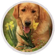 Round Beach Towel featuring the photograph Daffodil Dreams by Kim Henderson