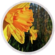 Round Beach Towel featuring the photograph Daffodil Evening by Robert Knight