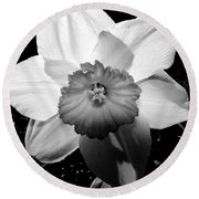 Daffodil In Springtime Round Beach Towel